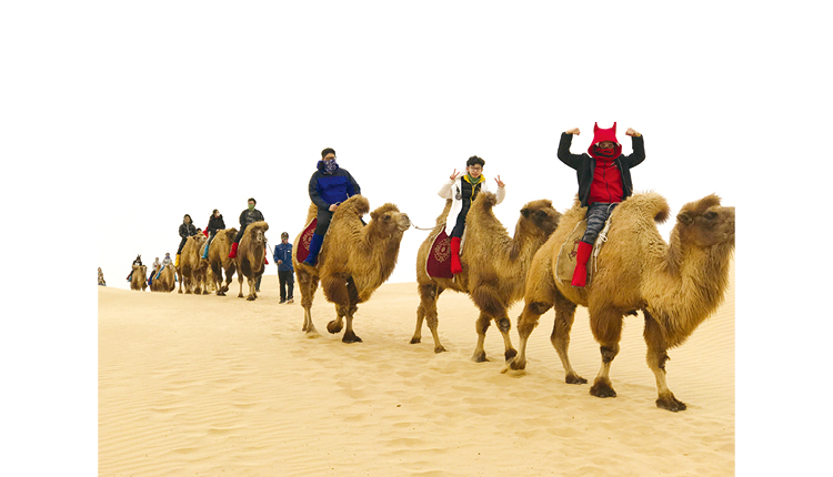交流團體驗騎駱駝。