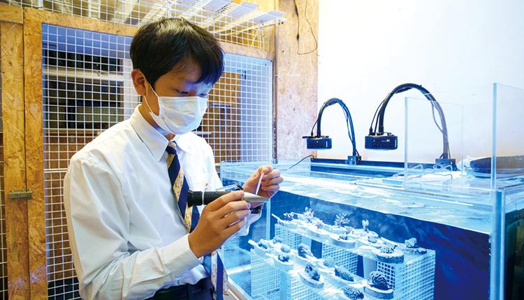 學校發展AI智能系統育養珊瑚,所培育的珊瑚會回歸其自然棲息地,同學可為香港珊瑚復育工作出一分力。