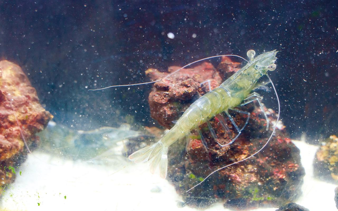 在生態學習中心更可讓學生飼養蝦,由老師與學生一同建構自動餵蝦器。