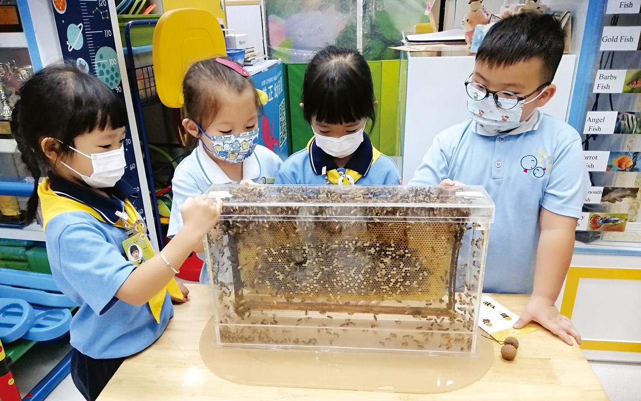 多姿多彩校園生活 - 認識小蜜蜂