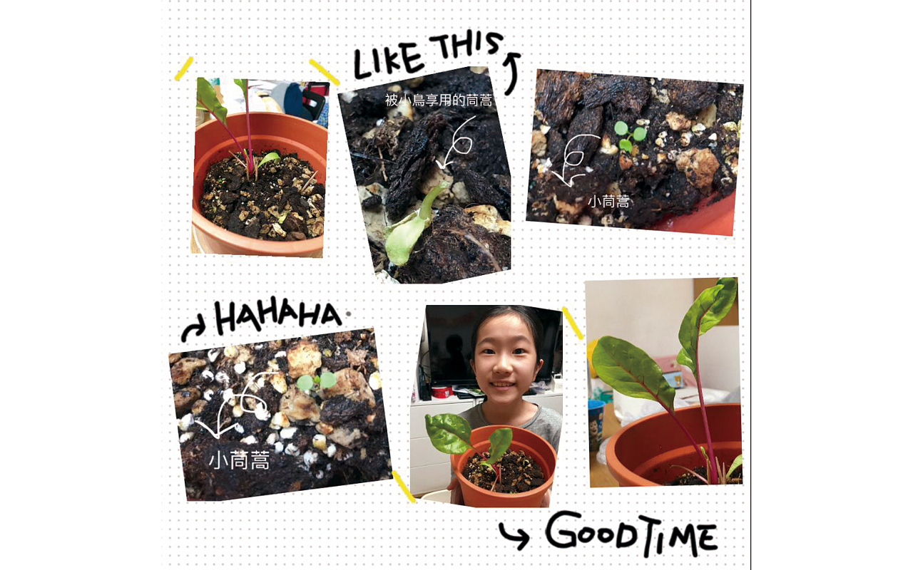 享受栽種的時刻,展示成果。